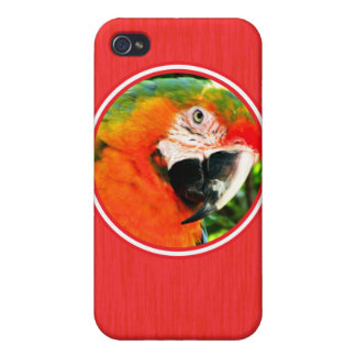 Scarlet Macaw Red iPhone 4 Case