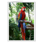 Scarlet macaw, red macaw photograp design greeting card
