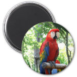 Scarlet macaw, red macaw photograp design fridge magnet