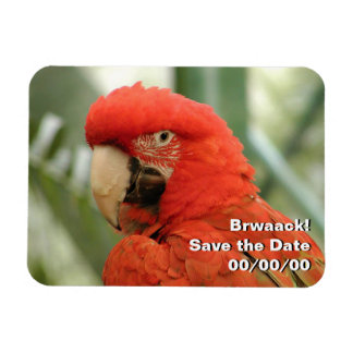 Scarlet Macaw Save the Date Magnet