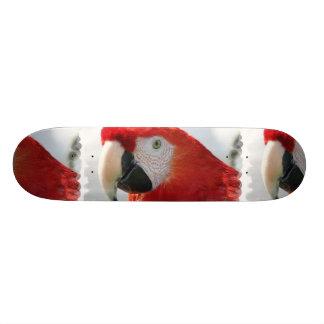 Scarlet Macaw Skateboard
