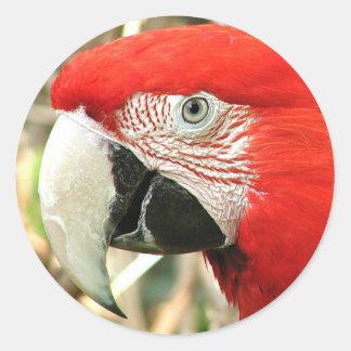 Scarlet Macaw Round Stickers