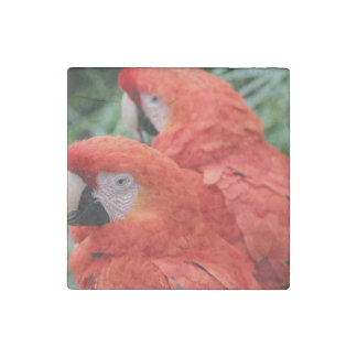 Scarlet Macaw Stone Magnet