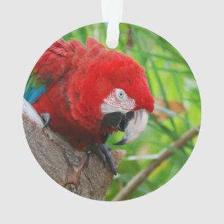 Scarlet Macaw with a Sharp Beak