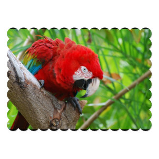 Scarlet Macaw with a Sharp Beak 5x7 Paper Invitation Card
