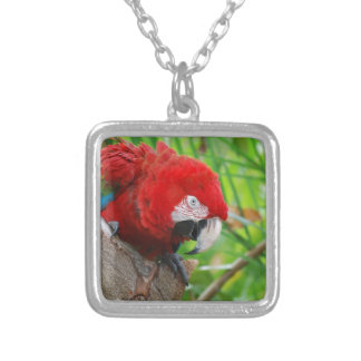 Scarlet Macaw with a Sharp Beak Necklace