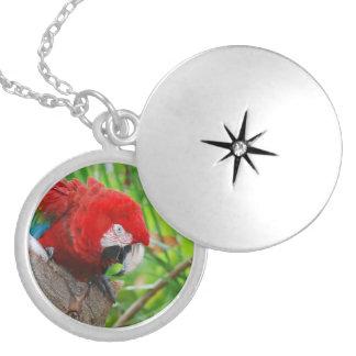 Scarlet Macaw with a Sharp Beak Custom Jewelry