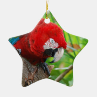 Scarlet Macaw with a Sharp Beak Double-Sided Star Ceramic Christmas Ornament