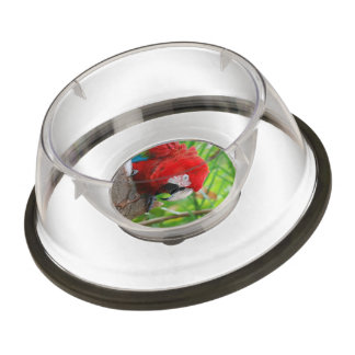 Scarlet Macaw with a Sharp Beak Pet Bowl