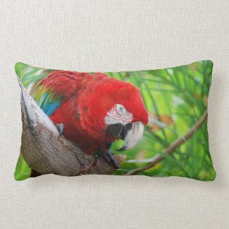 Scarlet Macaw with a Sharp Beak Throw Pillows
