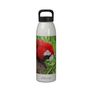 Scarlet Macaw with a Sharp Beak Water Bottles