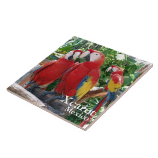 Scarlet Macaws Ceramic Tile