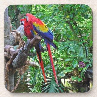 Scarlet Macaws Cork Coaster