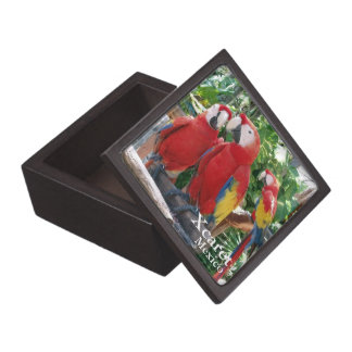 Scarlet Macaws Jewelry Box
