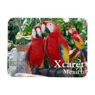 Scarlet Macaws Magnet