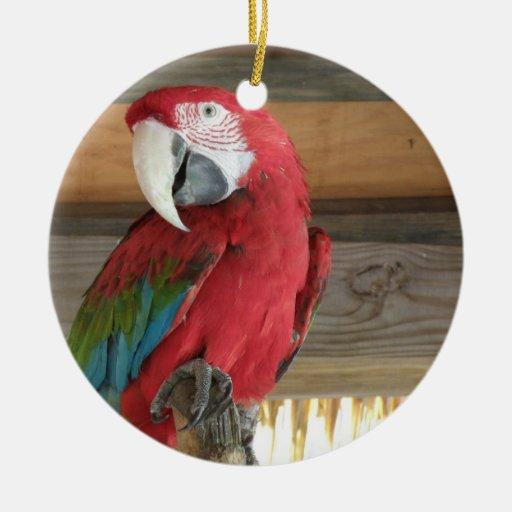 Scarlet Maccaw Orament Ornament