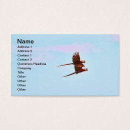 Scarlet Mackaw Couple Flying Business Card