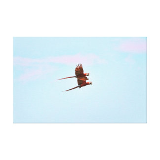 Scarlet Mackaw Couple Flying Stretched Canvas Prints