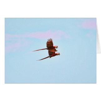 Scarlet Mackaw Couple Flying Card