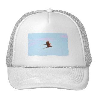 Scarlet Mackaw Couple Flying Trucker Hats