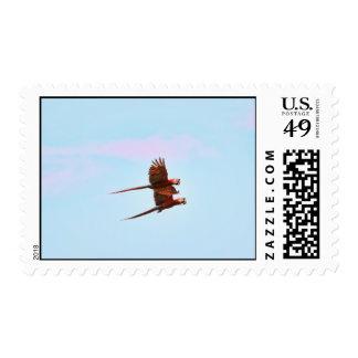 Scarlet Mackaw Couple Flying Stamp