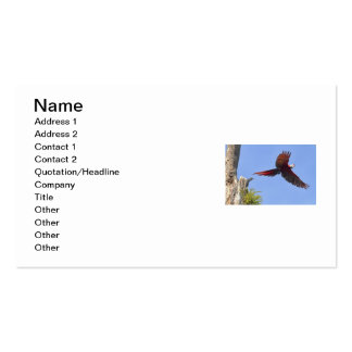 Scarlet Mackaw Flying Double-Sided Standard Business Cards (Pack Of 100)