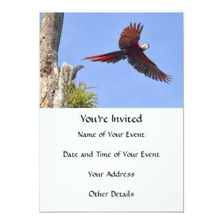 Scarlet Mackaw Flying 5x7 Paper Invitation Card