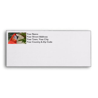 Scarlet Mackaw Photo Envelope