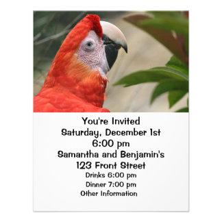 Scarlet Mackaw Photo Personalized Invitation