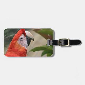Scarlet Mackaw Photo Luggage Tag