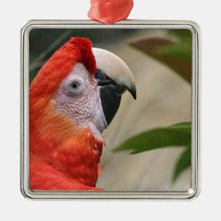 Scarlet Mackaw Photo Metal Ornament