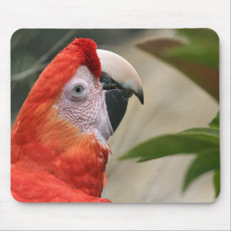 Scarlet Mackaw Photo Mouse Pad