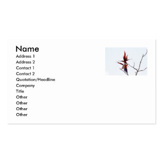 Scarlet Mackaws Double-Sided Standard Business Cards (Pack Of 100)