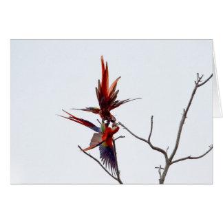 Scarlet Mackaws Greeting Card