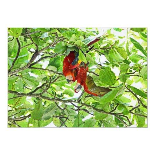 Scarlet Mackaws Couple 5x7 Paper Invitation Card