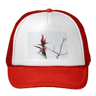 Scarlet Mackaws Hats