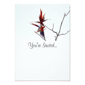 Scarlet Mackaws 5x7 Paper Invitation Card