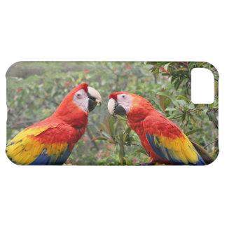 Scarlet Mackaws iPhone 5C Covers