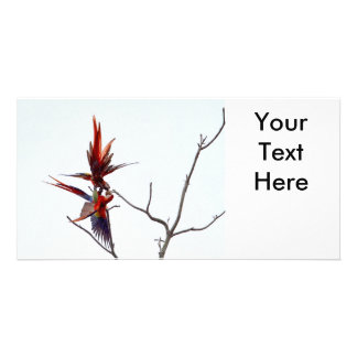 Scarlet Mackaws Photo Card Template