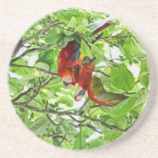 Scarlet Mackaws Picture Coaster