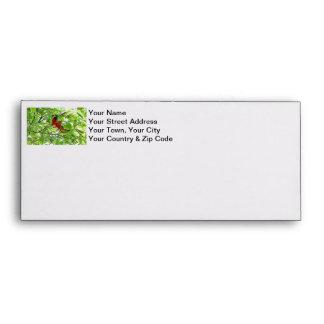 Scarlet Mackaws Picture Envelopes