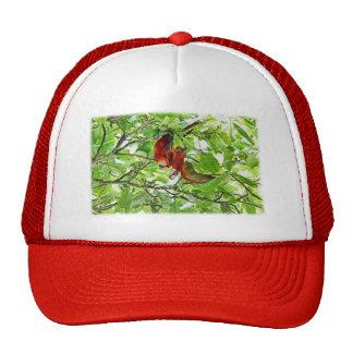 Scarlet Mackaws Picture Trucker Hats