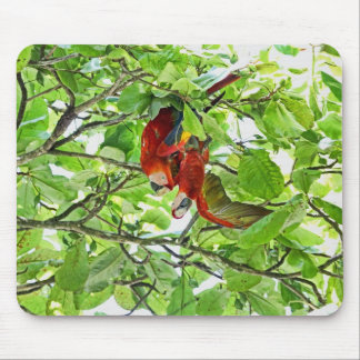 Scarlet Mackaws Picture Mouse Pad