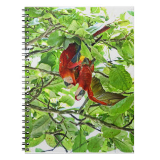 Scarlet Mackaws Picture Notebook