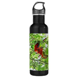 Scarlet Mackaws Picture 24oz Water Bottle
