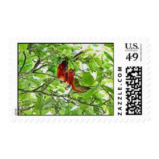 Scarlet Mackaws Picture Stamp