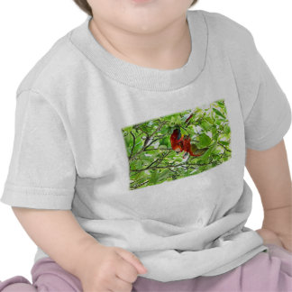 Scarlet Mackaws Picture T Shirt
