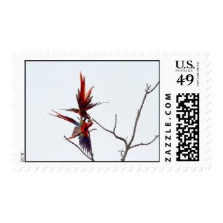 Scarlet Mackaws Postage