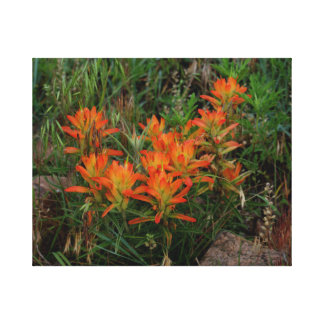 Scarlet Paintbrush Wildflower Art Canvas