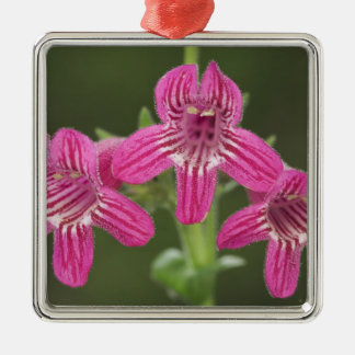Scarlet Penstemon, Penstemon triflorus, Metal Ornament